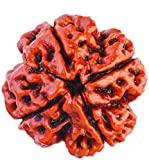 Santosh Char Mukhi Rudraksha / Four Face Rudraksha / 4 Mukhi Rudraksh / 4 Face Rudraksha with Neel Lab Tested Certificate 100% Original, Natural & Real Rudraksha (Lifetime Guarantee For Rudraksha Originality)