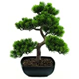Euro Palms 82600110 Bonsai-Pinie, 50 cm