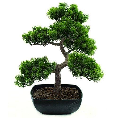 Euro Palms 82600110 Bonsai-Pinie, 50 cm
