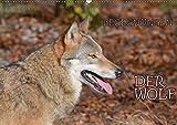 Begegnungen DER WOLF (Wandkalender 2019 DIN A2 quer): Der Wolf - fantastische Bilder vom Isegrim. (Monatskalender, 14 Seiten ) (CALVENDO Tiere)