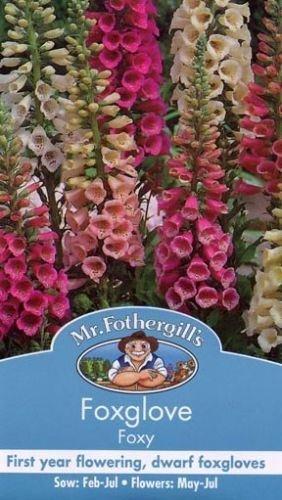 Unbeheizte Schale (Mr Fothergills Pilzsporen, Blume Fingerhut Foxy gemischt 1000 Samen)
