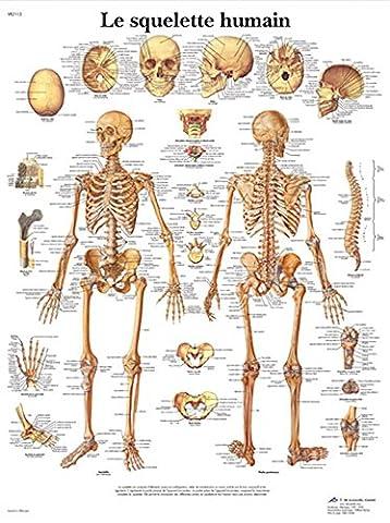 Poster Anatomie - Planche Anatomique le Squelette