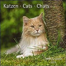 Katzen 2021 - Broschürenkalender - Wandkalender - mit herausnehmbarem Poster - Format 30 x 30 cm