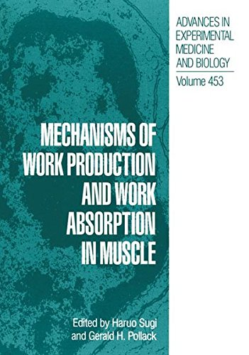 Mechanisms of Work Production and Work Absorption in Muscle (Advances in Experimental Medicine and Biology)