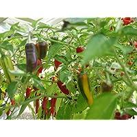 Premier Seeds Direct PEP119 - Semillas para verduras