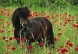 Schmidt Spiele - Shetland-Pony, 100 Teile Puzzle