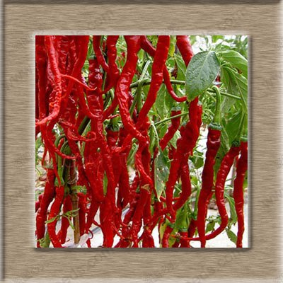 graines de poivre, les graines maison bonsaï, doux graines de poivre de cloche, le taux de germination élevé, 200 pcs / sac