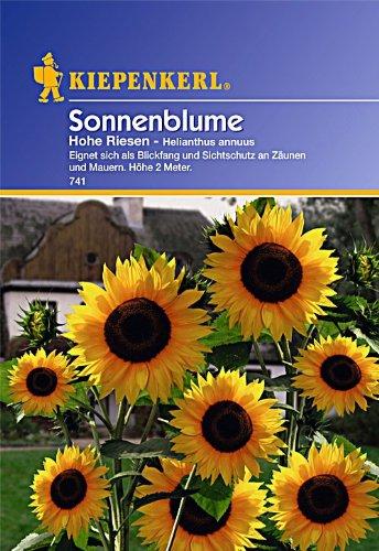 Sperli Blumensamen Sonnenblume Helianthus Hohe Riesen, grün