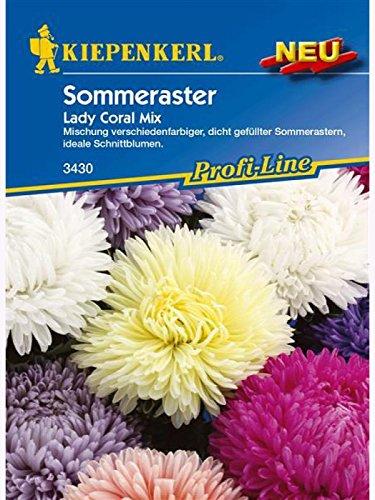 Astern Sommeraster Lady Coral Mix (Ernte Womens Erde)