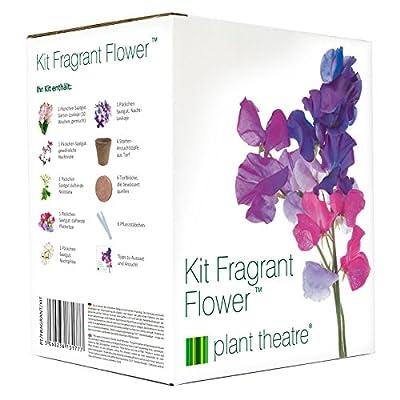 Plant Theatre Kit Fragrant Flowers - 6 wunderbare duftende Sorten zum Anbauen - ein großartiges Geschenk