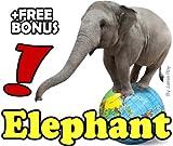 Learn to Read - Elephants (English Edition)