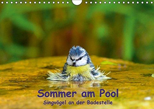 Sommer am Pool - Singvögel an der Badestelle (Wandkalender 2018 DIN A4 quer): Badende Singvögel im Garten (Monatskalender, 14 Seiten ) (CALVENDO Tiere) [Kalender] [Apr 07, 2017] Plemper, Ulrich
