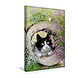 Calvendo Premium Textil-Leinwand 30 cm x 45 cm hoch, Neugierige Katze beobachtet Schmetterling | Wandbild, Bild auf Keilrahmen, Fertigbild auf Echter Leinwand. Aurorafalter Schmetterling Tiere Tiere