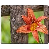luxlady Alfombrillas de goma natural imagen ID 31094037Hemerocallis Flores apoyado en un marco de madera valla