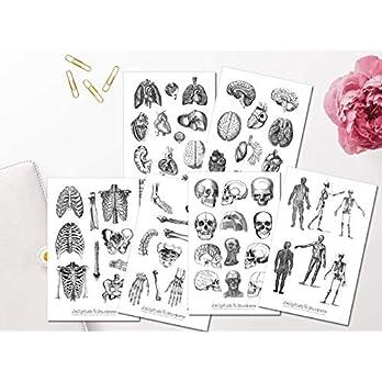 Vintage Anatomie Sticker Set | Aufkleber Körper | Journal Sticker | Sticker Knochen | Sticker schwarz weiß | Sticker Körper