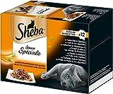 Sheba Sauce Spéciale Test