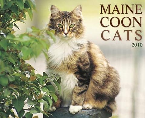 Maine Coon Cats 2010 Calendar