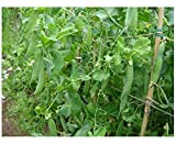 Premier Seeds Direct PEA01 Pea Feltham First First Early Seeds (Pack of 300)