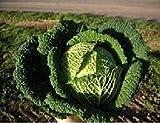 Portal Cool Vegetal - Reyes - Semillas de paquetes de laminas - Col de Saboya - Resolución F1