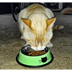 Comsmart Cat Bowl, Anti-slip Cat Food Bowl/Cat Feeding Bowl/Cat Water Bowl, Multi-purpose Double Pet Feeding Bowl (White… 14