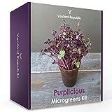 Pflanzen Sie Ihr eigenes SUPERFOOD - PURPLICIOUS MICROGREENS SET | Anzuchtset für gesunde Sprossen | Leicht zu züchtende Gemüse & Kräuter | Ernte in 2 Wochen | Perfektes Geschenk