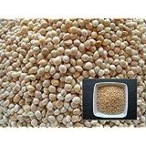 Millet à Grosses Graines - 15 grammes - Panicum Milice - Proso Millet (Engrais vert - Green manure)