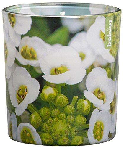 Duftglas Floral Garden 80/72 mm (6 Stück) - Löffelkresse