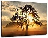Sonnenaufgang hinter einem Baum Format:80x60 cm Bild auf Leinwand bespannt, riesige XXL Bilder komplett und fertig gerah