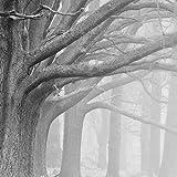 LONGYUCHEN 3D Tapete Retro Benutzerdefinierte Moderne Schwarz Und Weiß Wald Baum Tapete Wohnzimmer Schlafzimmer Hintergrund Silk Wandmalerei Wohnkultur,290Cm(H)×480Cm(W)