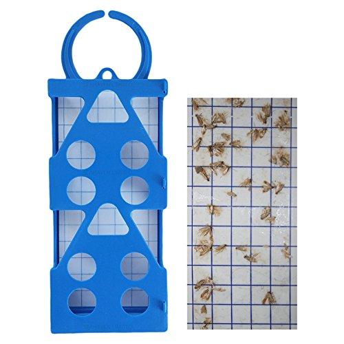 1-x-blu-entopest-professionale-antitarme-10-x-colla-feromone-boards