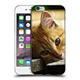 Just Phone Cases Schutz Hülle TPU Case Schutzhülle Silikon Tasche Dünn Transparent // V00004287 Katze liegend auf Holzbrettern // Apple iPhone 6 6S 6G PLUS 5.5