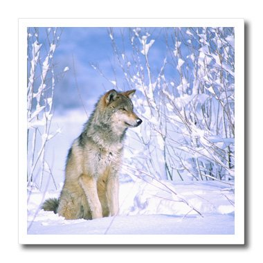 3dRose HT 83897_ 3Holz Wolf sitzend im Schnee, Canis Lupus NA02dno0317David Northcott Eisen auf Wärmeübertragung, 10von 25,4cm für weiß Material