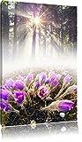 fioritura fiori viola nella foresta, formato: 100x70 su tela, XXL enormi immagini completamente Pagina con la barella, stampa d'arte sul murale con telaio, più economico di pittura o un dipinto a olio, non un manifesto o un banner,