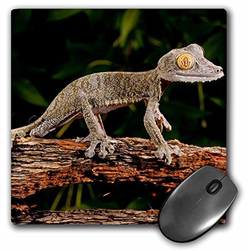 Danita Delimont - Lizards - Giant Leaf-tailed Gecko lizard, Madagascar - NA02 DNO0929 - David Northcott - MousePad (mp_140212_1) (Giant Gecko Tailed Leaf)