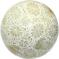 budawi® - Kugel Versteinerte Koralle Ø 50 mm, versteinerte Fossile Koralle preisvergleich bei billige-tabletten.eu