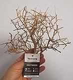 Tantora Driftwood White Mini