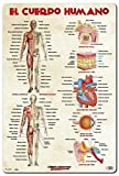 Grupo Erik Editores, S.L. - Lámina educativa el cuerpo humano grupo erik