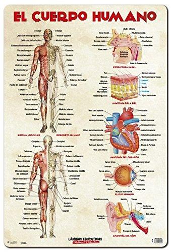 Grupo Erik Editores, S.L. Kunstdruck–Bildungspolitik der menschliche Körper Fraktion Erik
