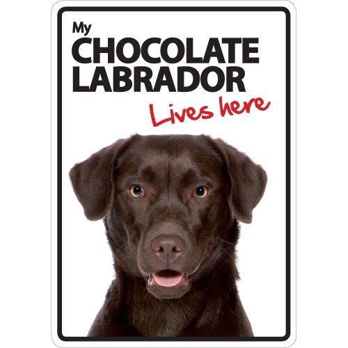 Vorsicht, Schokolade (Schokolade Labrador Lives Here A5Schild)