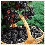 SANHOC 200 Pezzi Cinese Selvaggio Raspberry Bonsai Raspa Berry pianta Super Big Frutta Corbezzolo Blackberry per la casa Giardino: 9