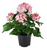 Flair Flower Hortensie Im Topf, Polyester, Kunststoff, Rosa, 22 x 22 x 30 cm