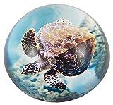 Unbekannt Générique 3501 Briefbeschwerer Meeresschildkröte in Schatulle Glas mehrfarbig 8x4x8cm