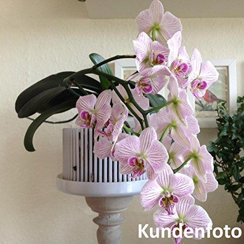 preisvergleich orchitop l design orchideentopf f r alle orchideen willbilliger. Black Bedroom Furniture Sets. Home Design Ideas