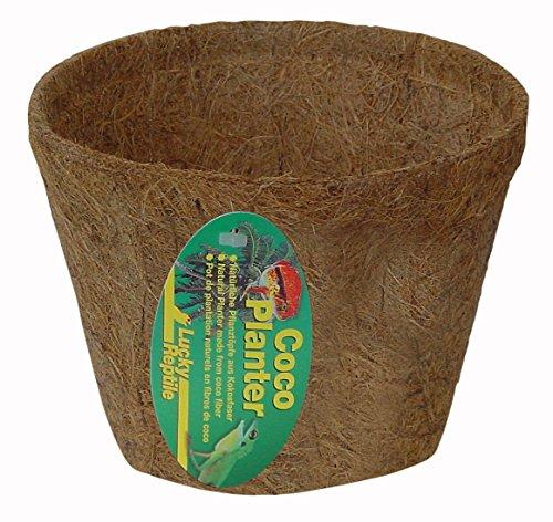 lucky-reptile-cp-m-coco-planter-mittel