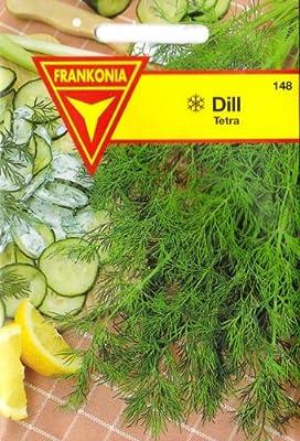 Dill, Tetra, Anethum graveolens, Samen für ca. 3 lfm von Philipp Klein GmbH - Du und dein Garten