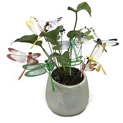 G2PLUS 12 Stk Libelle Gartenstecker 25CM Libelle Dekostecker als Deko für Garten oder Blumentopf von G2PLUS - Du und dein Garten