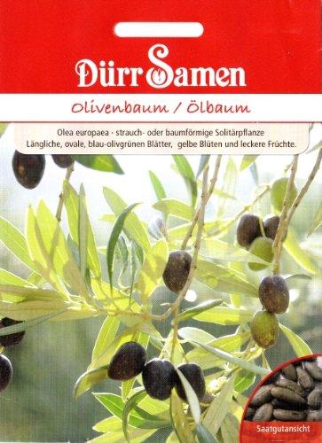 Olivenbaum, Ölbaum, Olea europaea, ca. 8 Samen