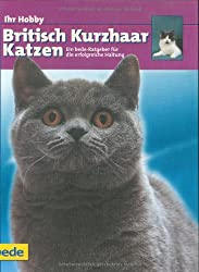 Ihr Hobby British Kurzhaar Katzen.