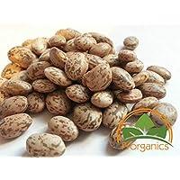 Portal Cool 100 Orgánica Pinto Beans semillas por Prorganics