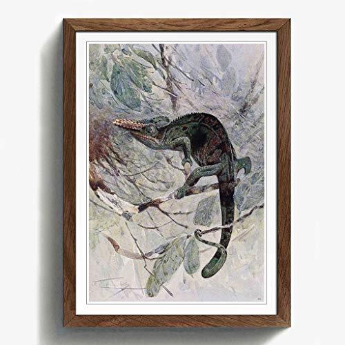 BIG Box Art Vintage W H. Kuhnert afrikanischen Chameleon Schwarz Gerahmter Druck, Mehrfarbig, 24,5x 18/62x 45cm/a2-p, Holz, walnuss, 24.5 x 18-Inch/62 x 45 cm/A2 - Afrikanische Walnuss